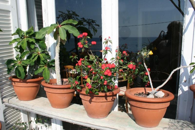 Mon balcon aux frileuses en cette fin juillet Beauta10