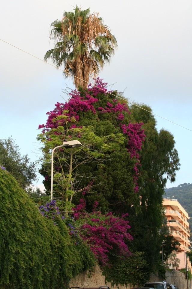 Ma maison vue de l'extérieur Bougai14