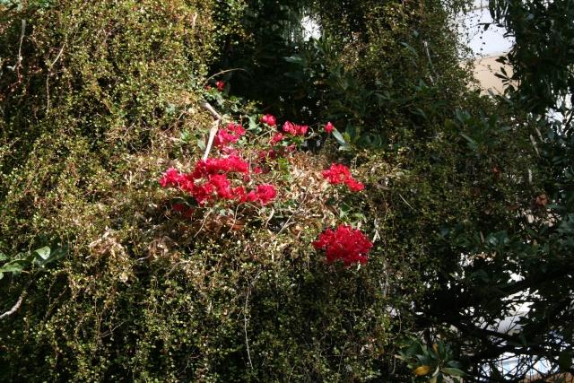 A la mi octobre, le rouge est encore mis Bougai15