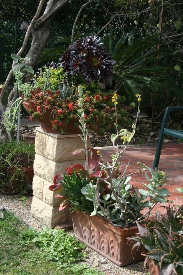Coupes de succulentes qui démarrent Bout_d11
