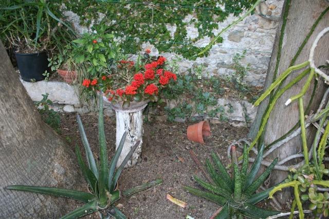Taille d'une hampe florale Enclos10