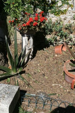 Taille d'une hampe florale Enclos11