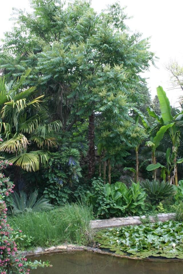 Un jardin d'eau extraordinaire Ensemb10