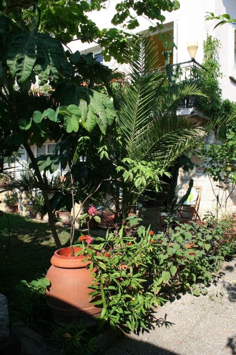 Entrée de mon jardin Entrae14