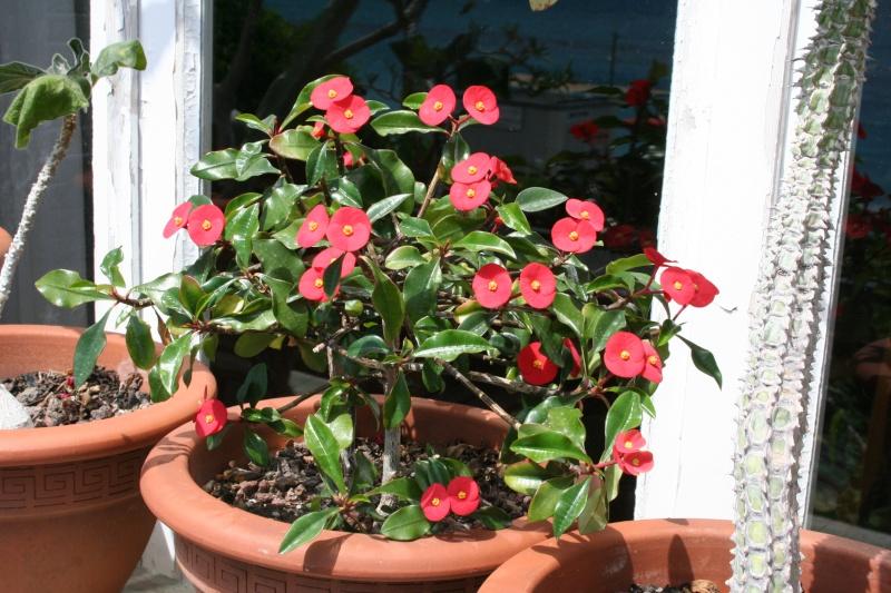 Toutes les plantes avec leur tolerence de température minimal pour l'hiver. Euphor24