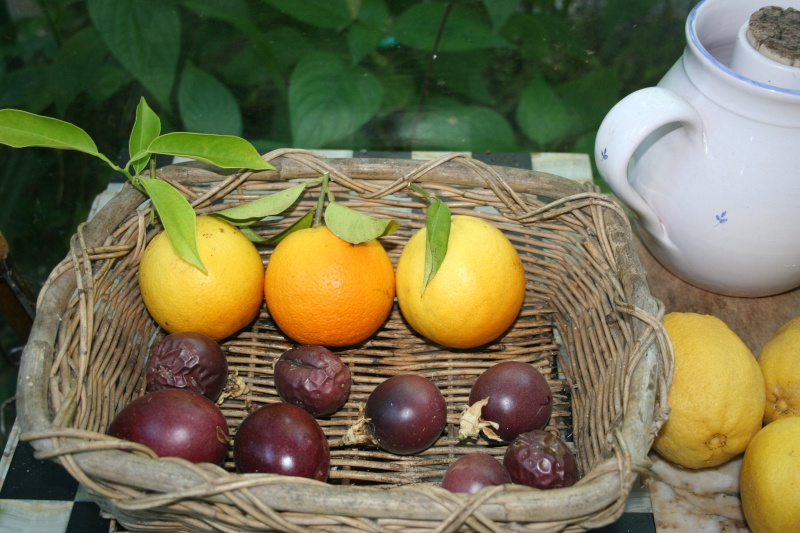 Fruits de saison Fruis_10