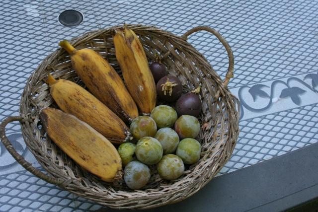 Coupe de fruits de saison Fruits10