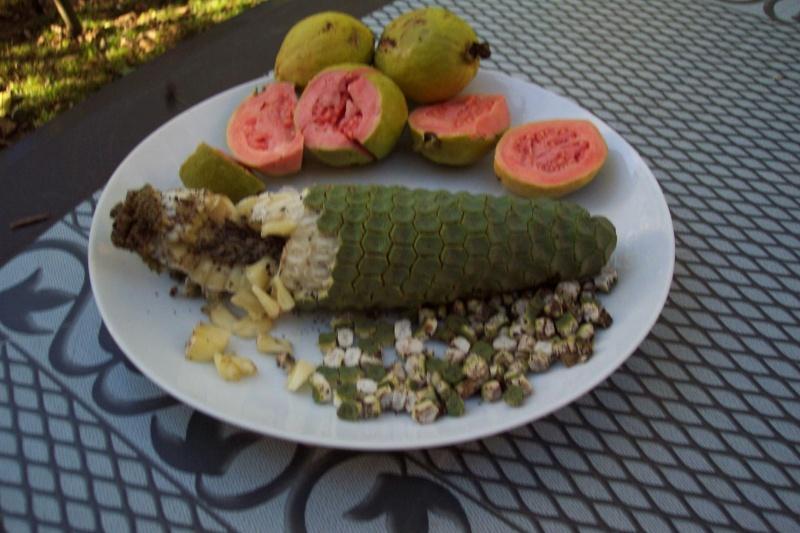 Présentation de mes fruitiers Goyave10