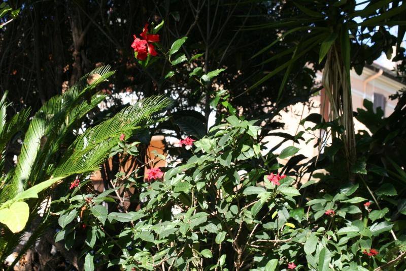 Tour de jardin Hibisc19