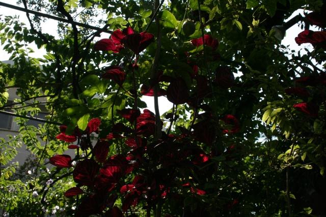 Fleurs de début aout Iresie10