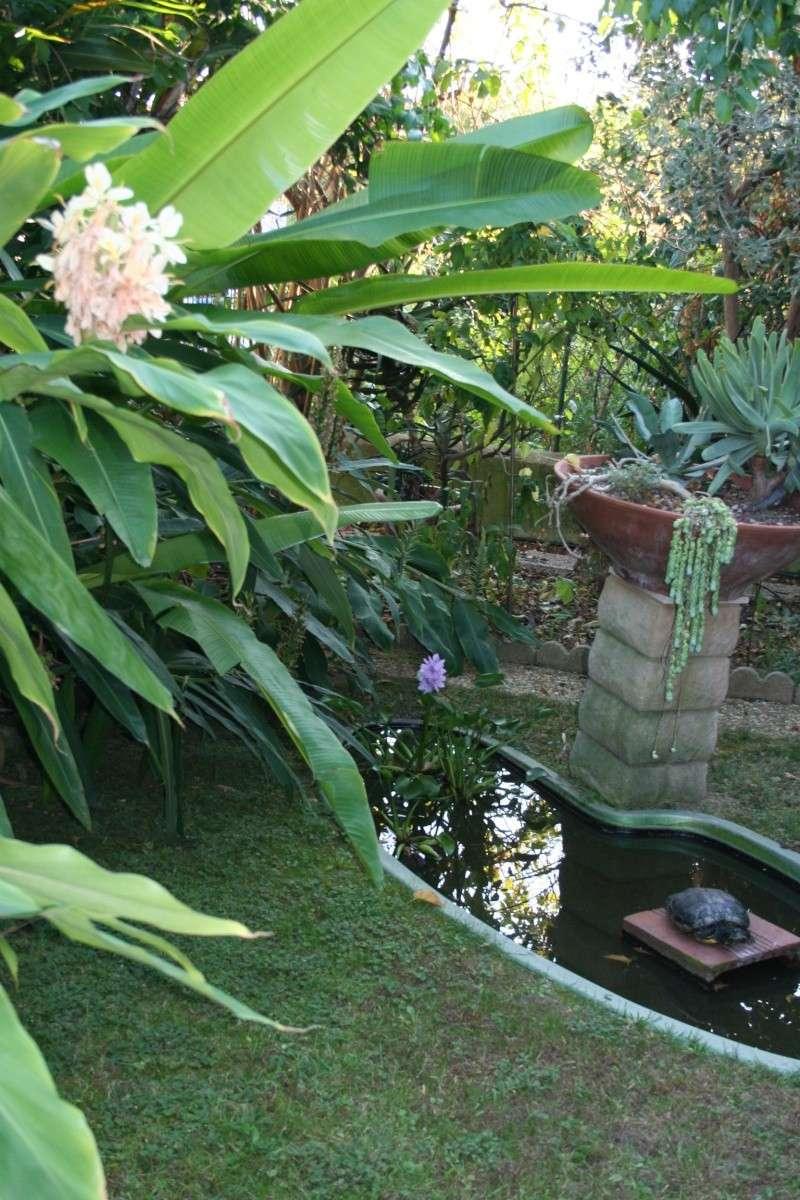 Tortue de Floride en ambiance Jardin18