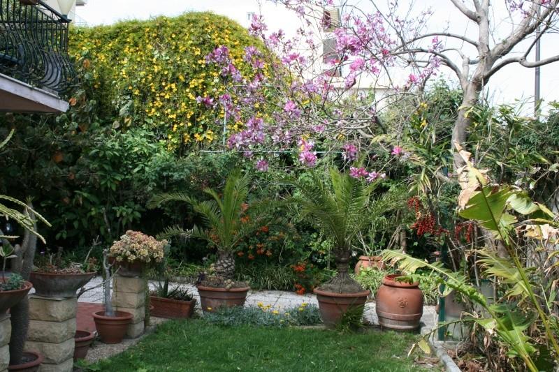 Strelitzia reginae en haie Jardin20