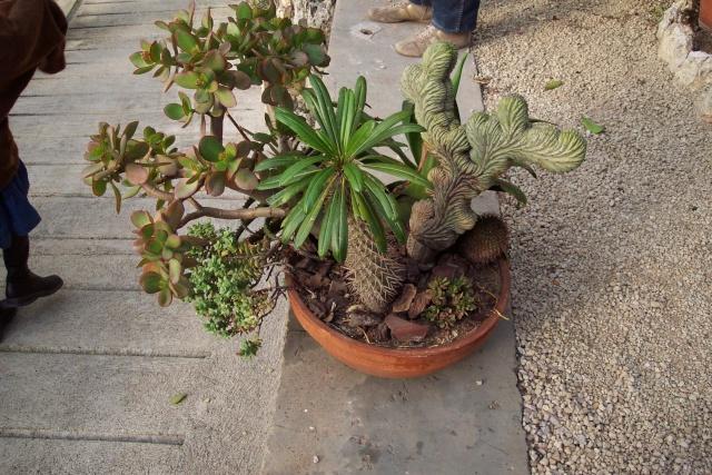 Exemples de coupes de succulentes au Jardin Exotique de Monaco Je_de_13