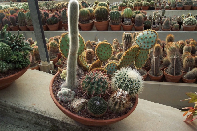 Exemples de coupes de succulentes au Jardin Exotique de Monaco Je_de_14