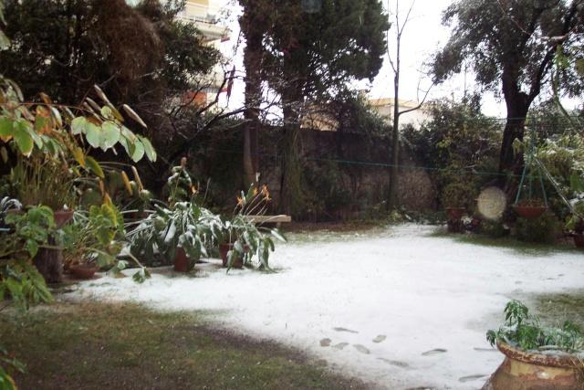 Strelitzia reginae, floraison Neige_10