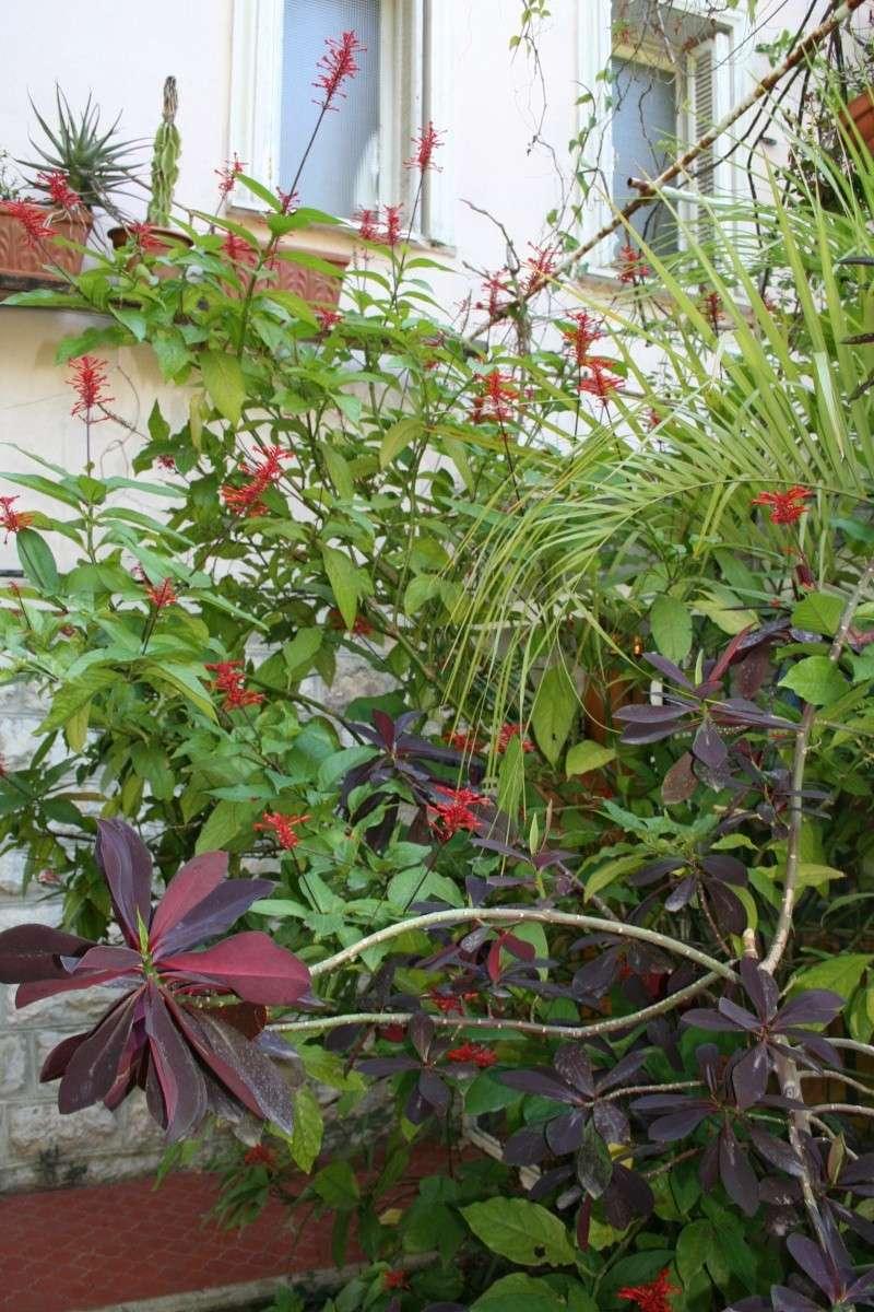 un nom pour ma plante... merci Odonto15