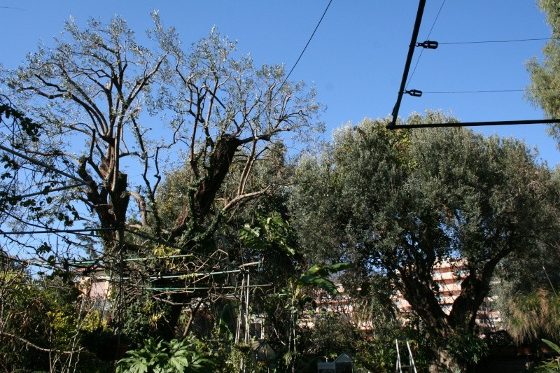 Les Olives .... Olivie10