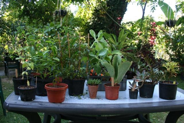 Bourse aux plantes du JB de Nice,hier 4 octobre Plante10