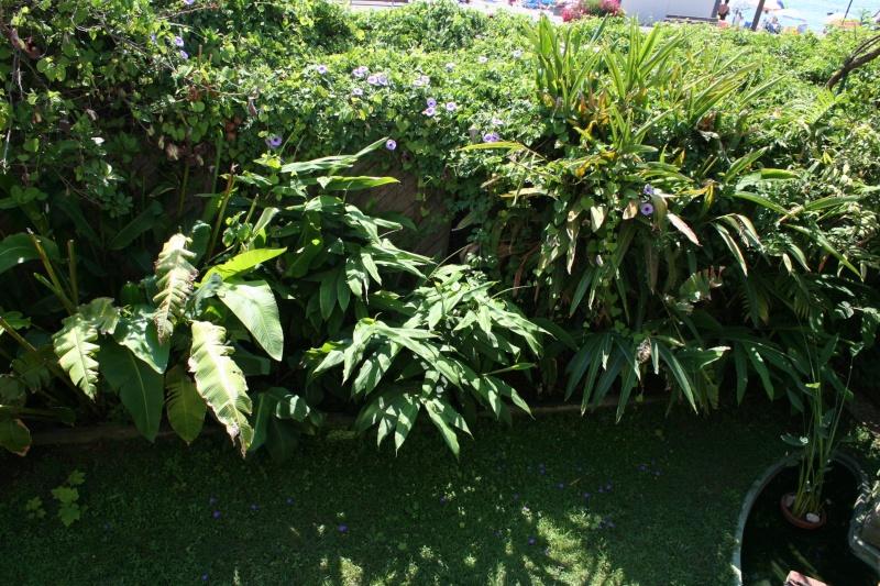 Ambiance tropicale de juillet Plate_19