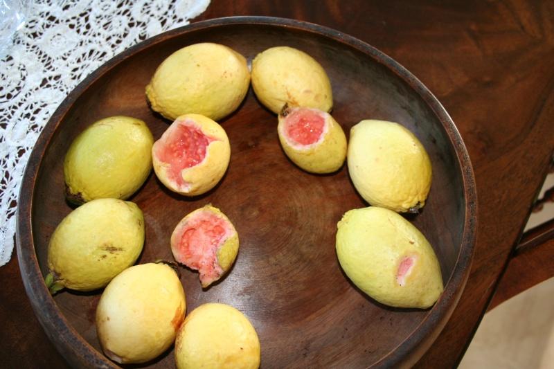 Présentation de mes fruitiers Psidiu15