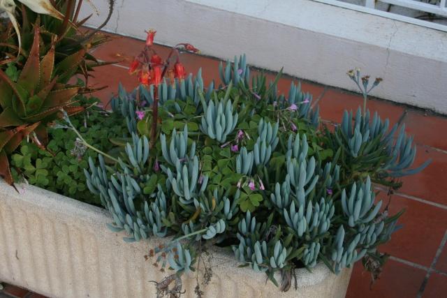 Une terrasse à Menton Seneci12
