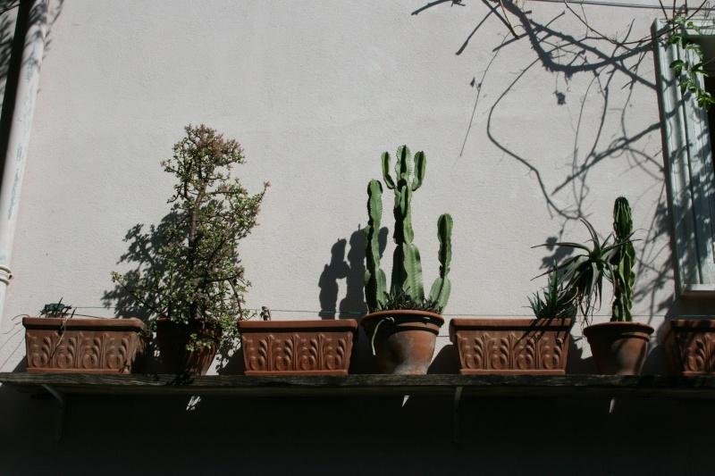 mes  succulentes Succul13