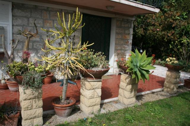 Coupes de succulentes qui démarrent Vue_ge10