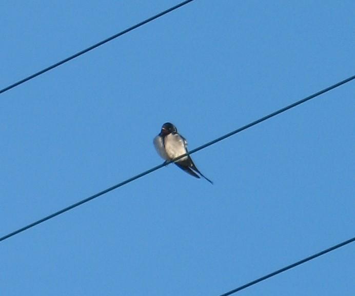 Animaux, oiseaux... etc. tout simplement ! - Page 2 07040810