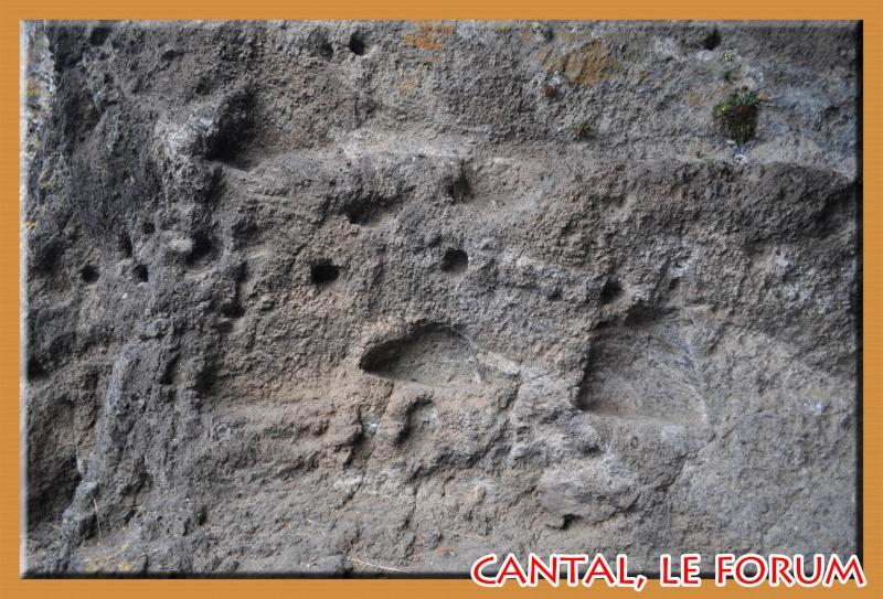 Les habitats préhistoriques de Cuze (Neussargues Moissac) Dsc_7519