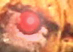 Terminator 4: le retour de la vengeance de citrouillator! Oeil11