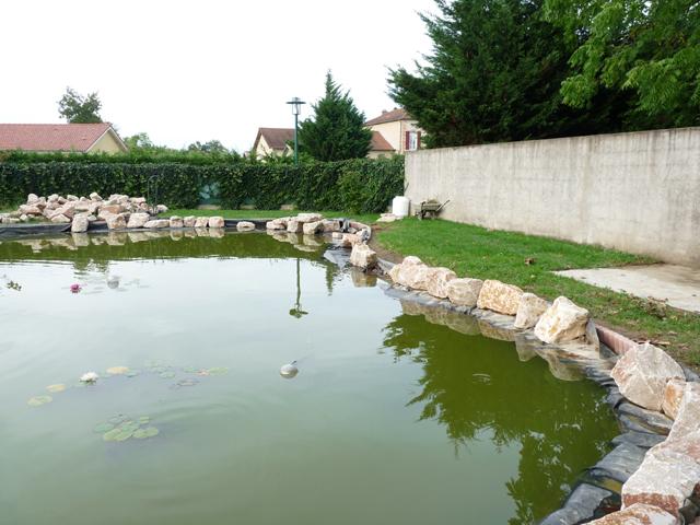 Mon bassin - Page 2 Bassin31