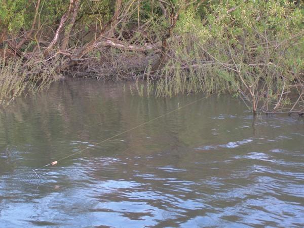 Une bouée sur la Saône Peche_33