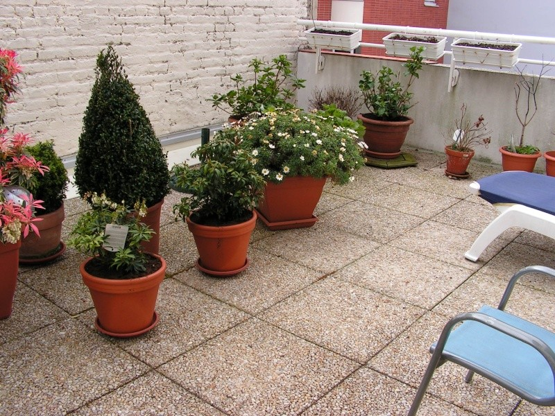 mon petit coin de verdure en centre ville  ;-) Pict0068