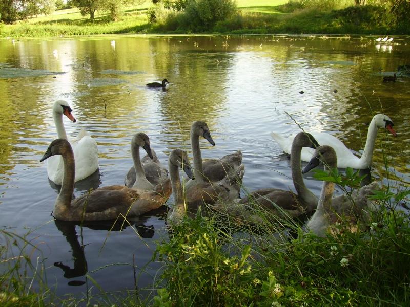 des vilains petits canards!!! - Page 2 Pict0226