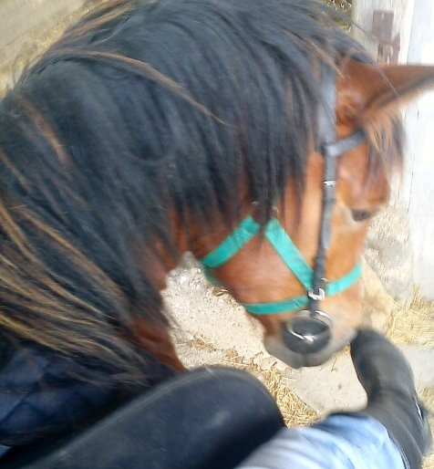 Vicomte, poulain en cours de dressage - Page 8 Photo10