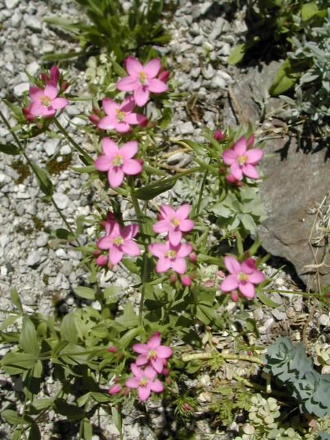 2 plantes sur prairie calcaire. Dscn9713