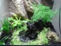 Comment démarrer un aqua-terrarium correctement ? 2011-016