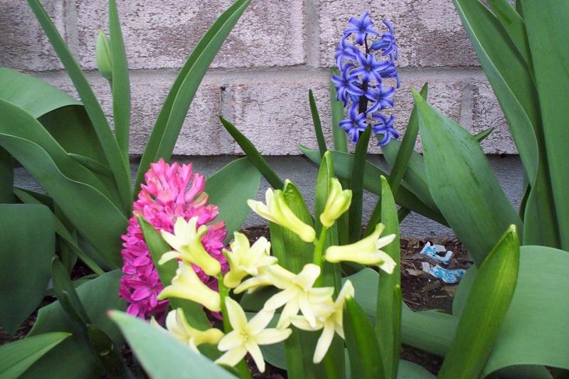 Thème du mois de Mai 'Le renouveau du printemps' Photo110