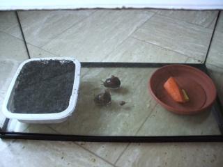 Observation des escargots Escarg10