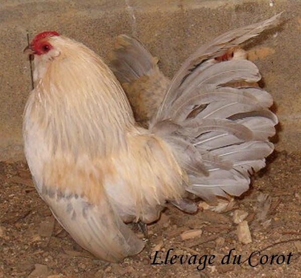 L'élevage du Corot Anv-po10
