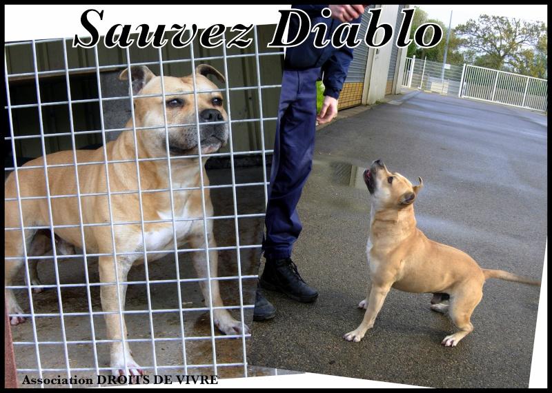 SOS DIABLO staff lof  URGENT eutha! Downlo23