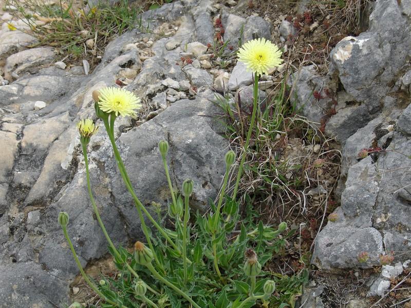comment s'appelle cette plante?  Pissen10
