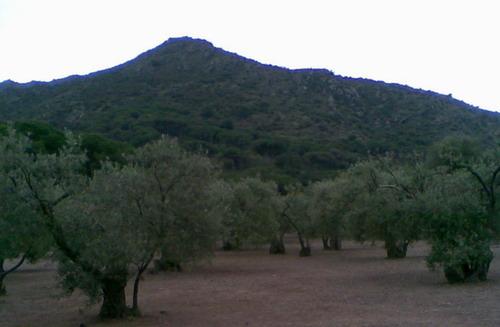promenade dans une oliveraie, prés de Cadaques Photo029