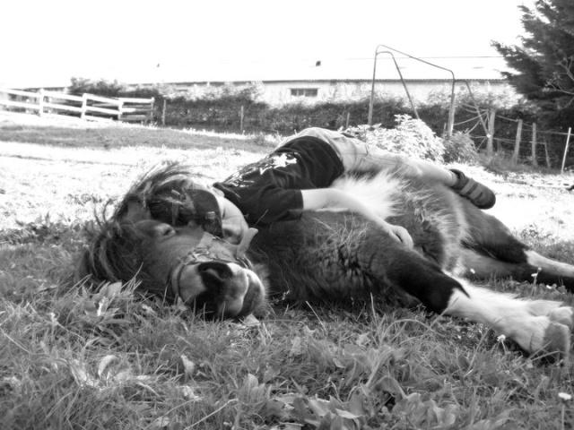 NOUVEAU CONCOURS PHOTO : la sieste à cheval ! 21591510