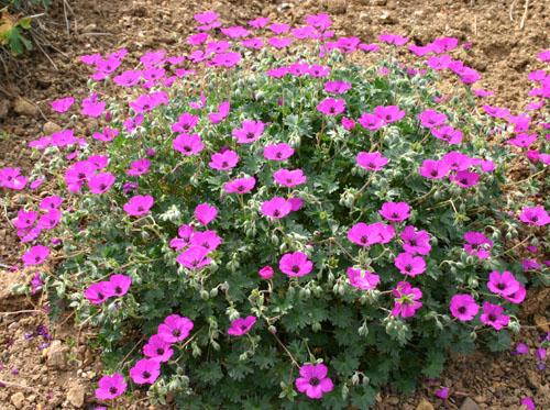 Mon jardin ..... Img_2513