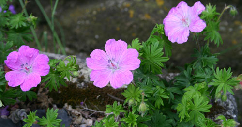 Mon jardin ..... Img_2515