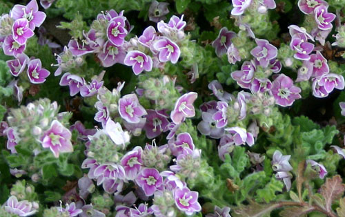 Mon jardin ..... Img_2617