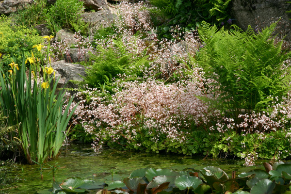 Mon jardin ..... Img_2842