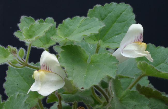 Plantes très faciles Img_3013