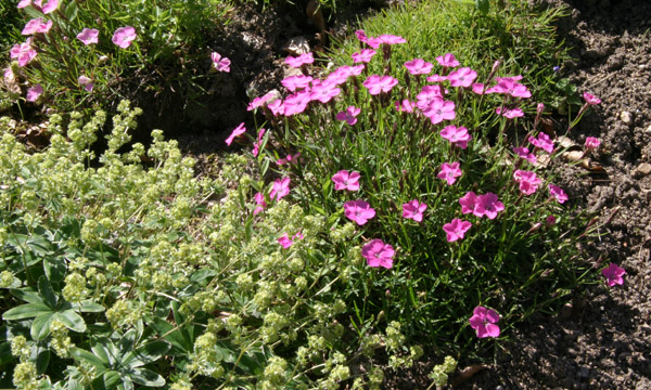Mon jardin ..... - Page 2 Img_3341